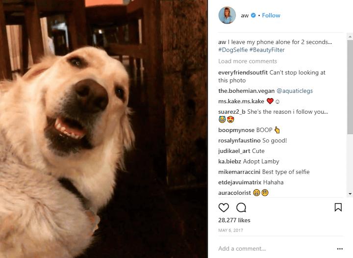 dog selfie instagram caption example