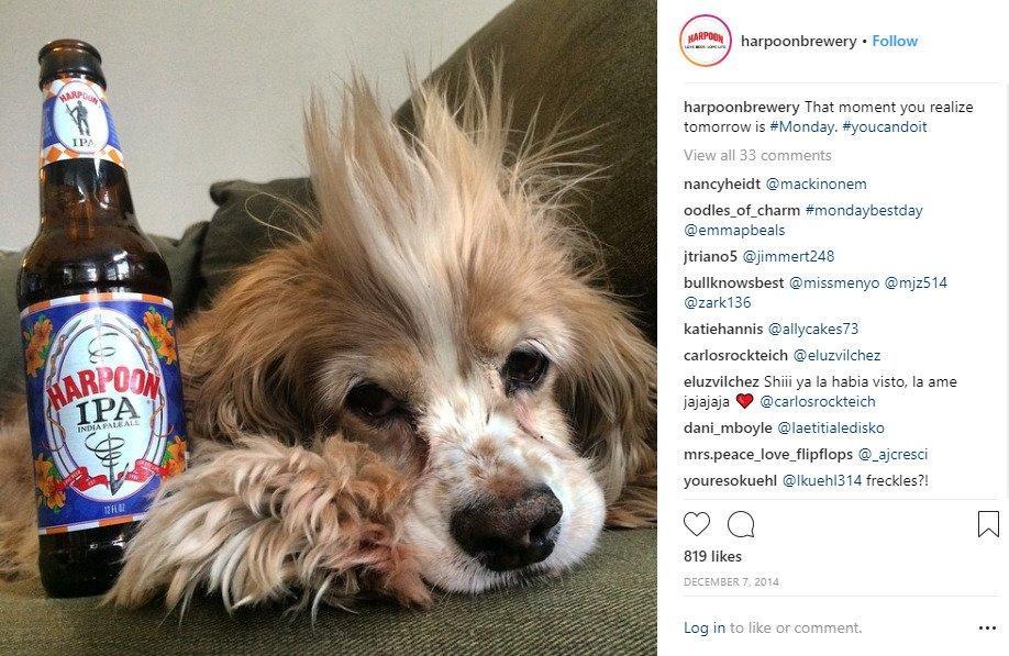 harpoon-dog-post-instagram-marketing