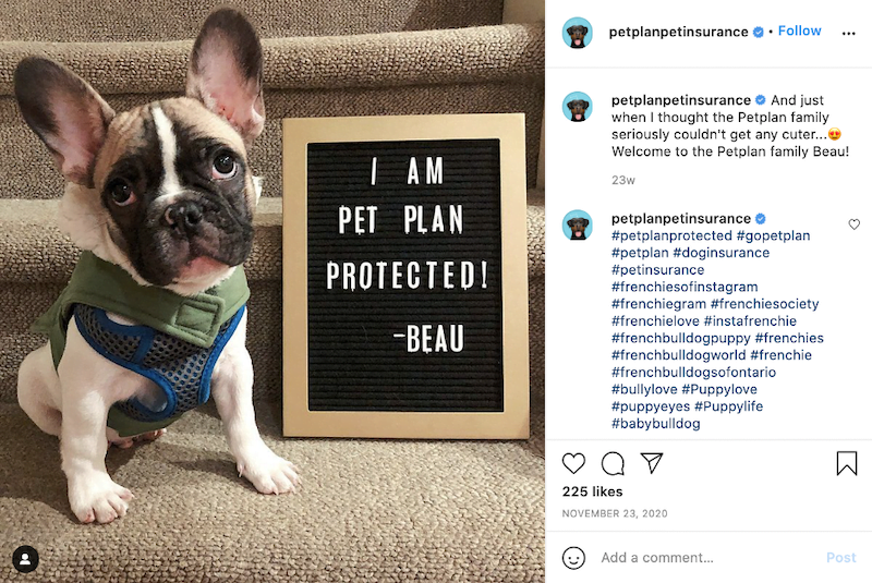 june marketing ideas insurance awareness day pet insurance post