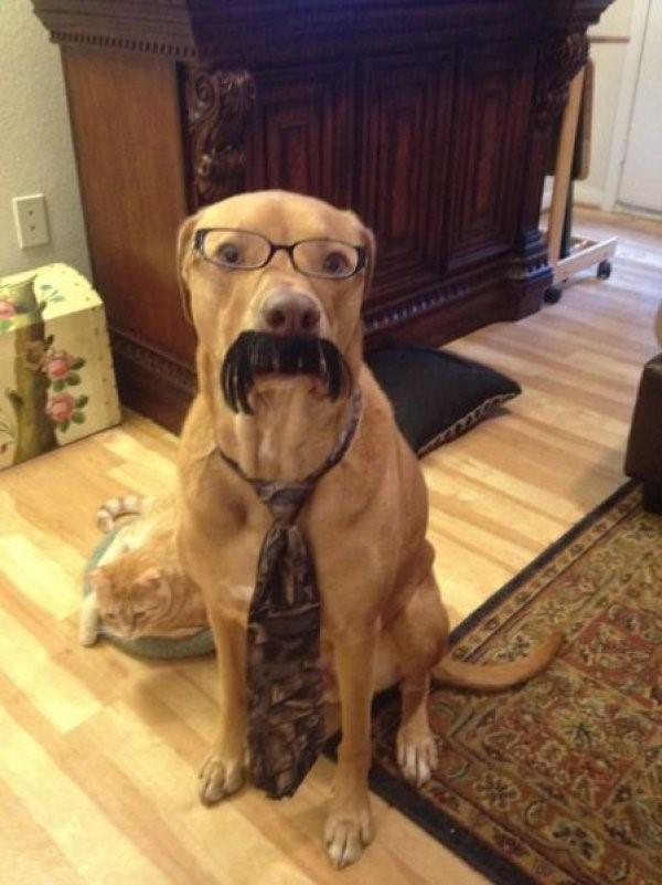 Twitter ads dog wearing glasses